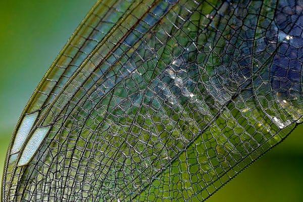 La RRI nelle nanoscienze e nanotecnologie